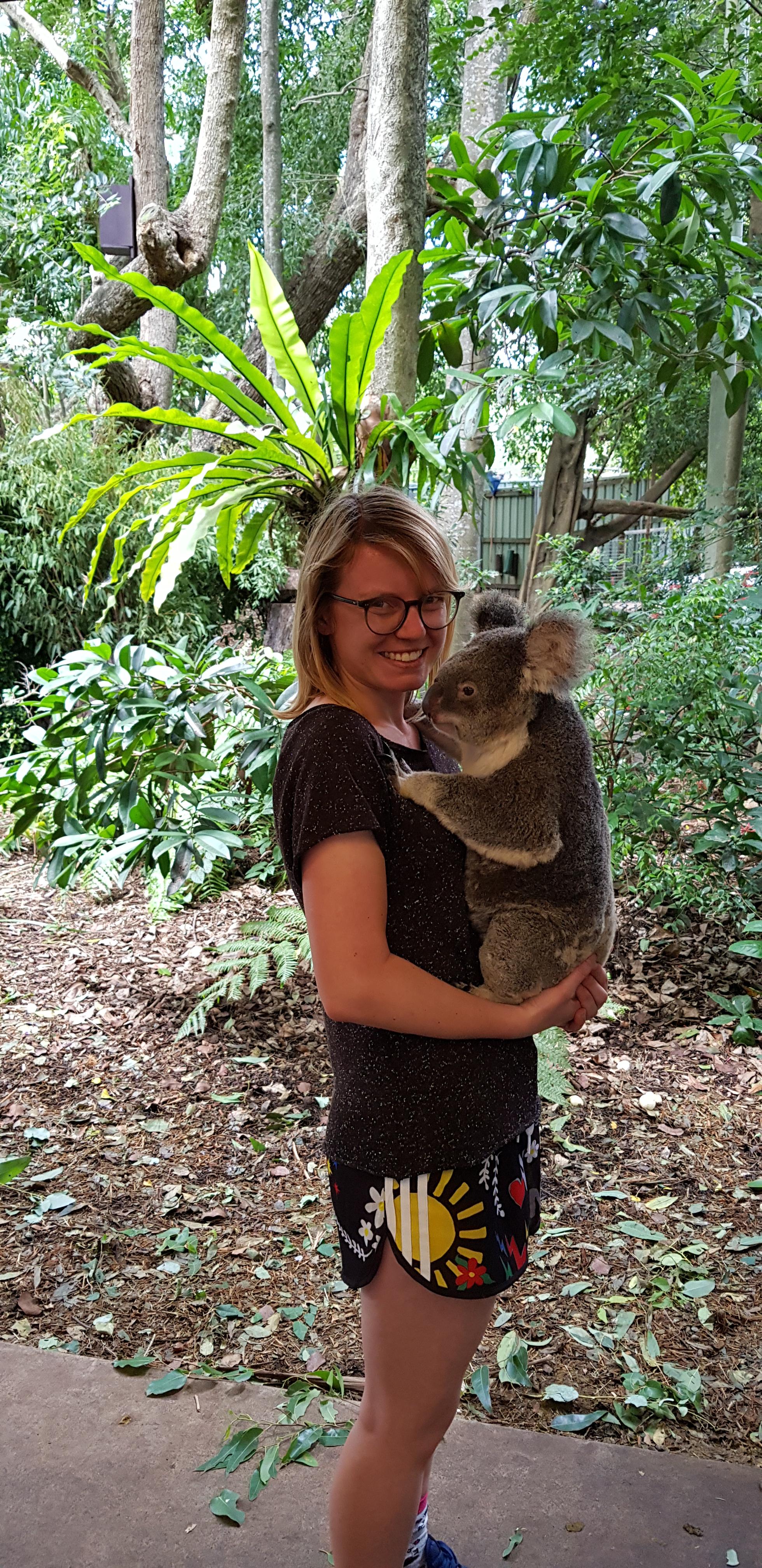 Przytulam koalę